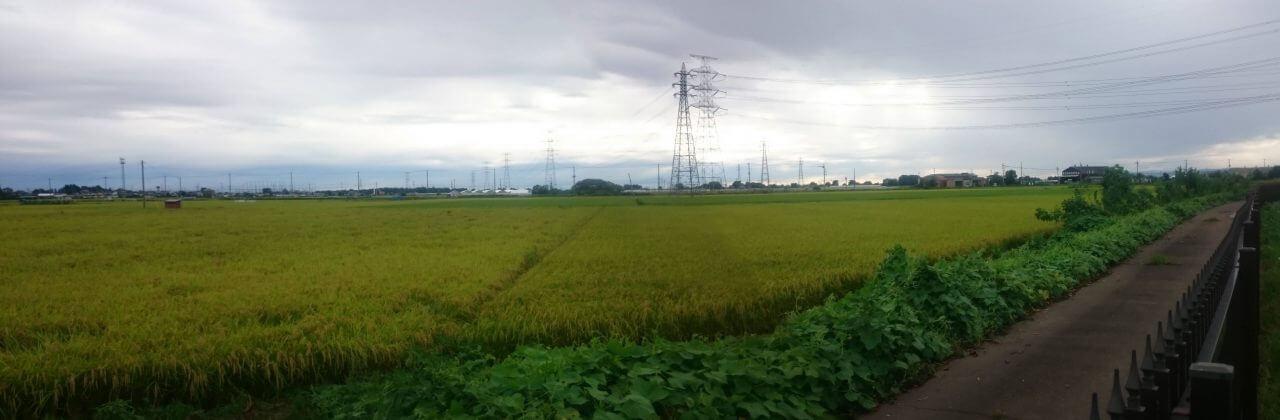 稲0831